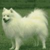 Разные породы собак - презентация
