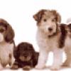 Работа для собак - презентация