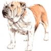 Собаки разных пород, разводимые человеком - презентация