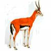 Животные Африки - презентация