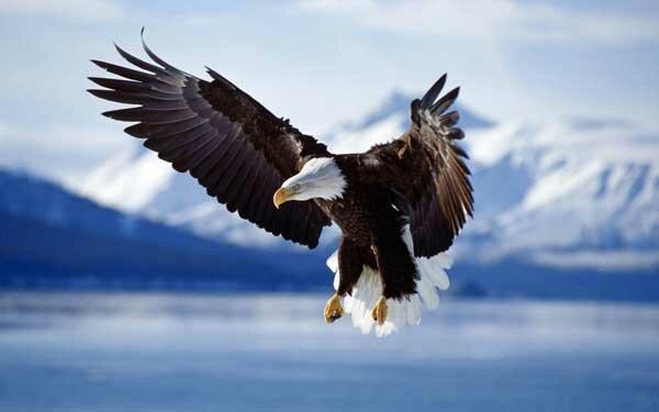 Полет орла