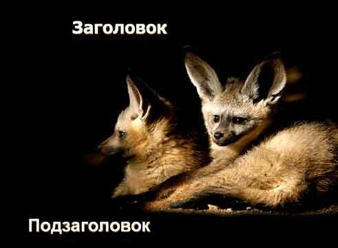 Шаблон презентации Дикие животные - титул