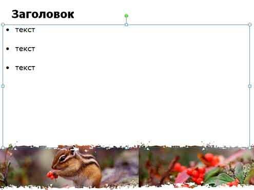 Шаблон презентации Бурундук - содержание