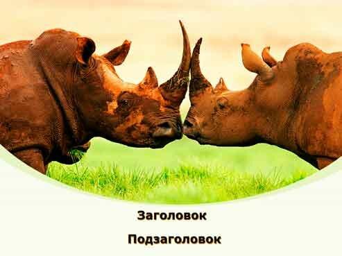 Шаблон презентации Битва носорогов - титул