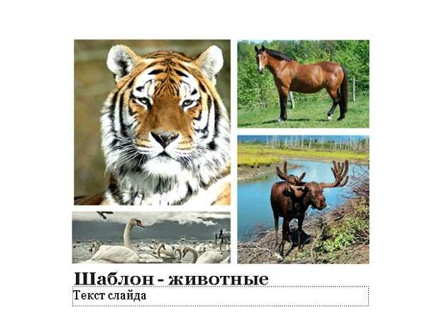 Шаблон презентации Животные - титул