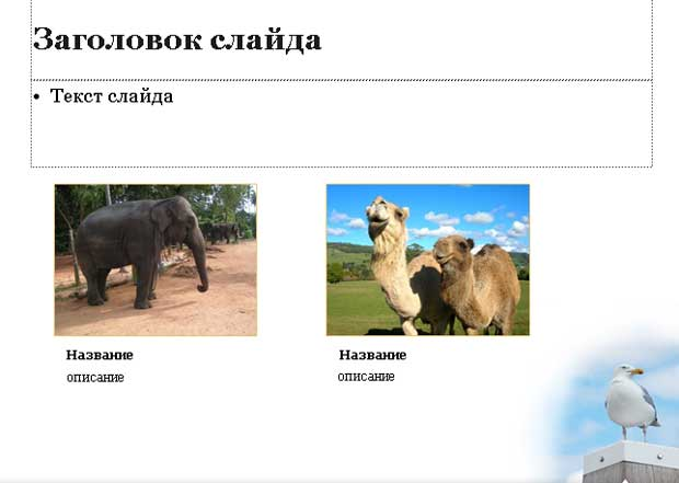 Шаблон презентации Животные - основная часть